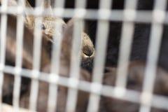 Naso del coniglio dietro la grata delle cellule Immagine Stock Libera da Diritti