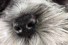 Naso di cane Fotografie Stock Libere da Diritti