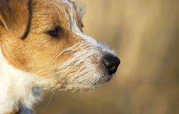 Naso di un cucciolo sveglio del cane di animale domestico immagine stock libera da diritti