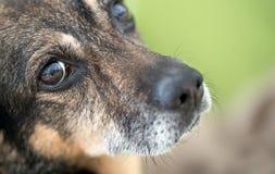 Naso ed occhio del ` s del cane Fotografia Stock Libera da Diritti