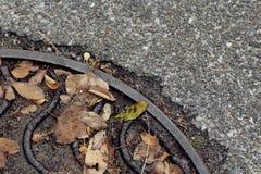 Nass Abwasserkanaleinsteigeloch mit gelben Blättern auf der Pflasterung stockfoto