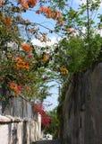 Nassau Blooming Street Stock Image