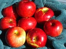 Nasse Äpfel auf einem Tuch Stockbild