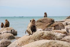 Nasse Affe-Mutter und Baby, die auf einem Felsen ein Sonnenbad nimmt Lizenzfreie Stockbilder