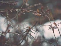 Nasse Anlage verzweigt sich in Winterwald - Retro- Weinleseeffekt Lizenzfreie Stockfotografie