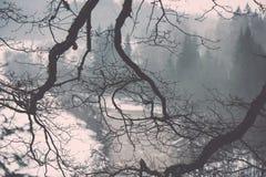 Nasse Baumaste im Winterwald - Weinlese Retro- Stockbild