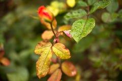 Nasse Blätter des Herbstes Stockbild