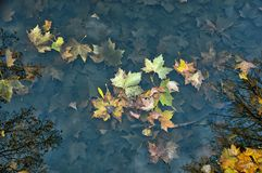 Nasse Blätter des Herbstes stockfotografie