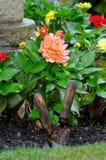 Nasse Chrysantheme Stockbild