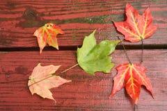 Nasse Fall-Blätter auf Rotholz   Stockbild