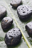 Nasse Flussfelsen auf einem grünen Blatt Lizenzfreie Stockfotos