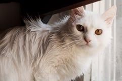 Nasse Katze Stockfotografie
