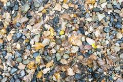 Nasse kleine Felsen und gefallene Blätter für Hintergründe stockfotos