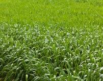Nasse Rasenfläche Lizenzfreie Stockbilder