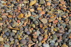 Nasse Steine im Freien, die im Sun sich aalen Lizenzfreie Stockfotos
