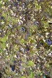 Nasse Steine und Algen Stockfoto