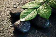Nasse Steine und Blätter Stockfoto