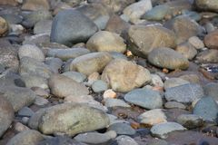 Nasse Steine und Felsen auf einem Hintergrund des sandigen Strandes Lizenzfreie Stockbilder