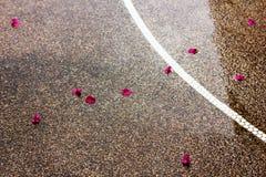 Nasse Straße draußen mit den rosa Blumenblättern und weißer Linie Lizenzfreie Stockfotografie