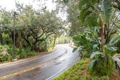 Nasse Straße, die durch Tropen kurvt Lizenzfreies Stockfoto