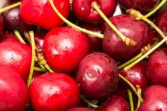 Nasse und frische rote Kirschen Stockfotos