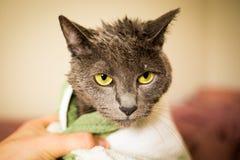 Nasse und traurige Katze nach einem sauberen Bad im Tuch lizenzfreies stockbild