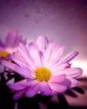 Nasse violette Blume lizenzfreie stockbilder