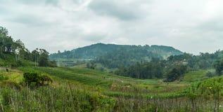 Nasse Wiesen u. Unter-Montane und Montane Wald Horton Plains Na Stockbilder