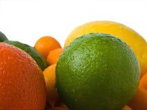 Nasse Zitrusfrüchte (Orange, Kalk, japanische Orange, Pampelmuse) lokalisiert auf wh lizenzfreie stockfotografie