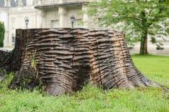 Nasser alter Baumstumpf im Park Lizenzfreie Stockfotos