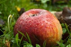 Nasser Apfel Stockbilder