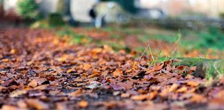 Nasser Autumn Leaves lizenzfreies stockfoto