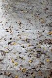 Nasser Bürgersteig nach dem Regen, mit Blättern Stockbild