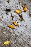 Nasser Bürgersteig nach dem Regen, mit Blättern Stockfotografie