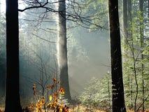 Nasser Baum, der von auf einem kalten Morgen gewärmt werden dämpft lizenzfreie stockbilder