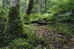 Nasser Baumstamm und grünes Moos in der Waldnahaufnahme Stockfotografie
