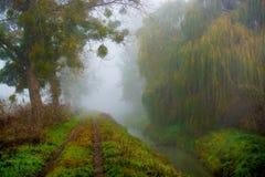 Nasser feuchter düsterer Wald im Nebel Lizenzfreie Stockbilder