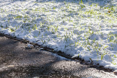 Nasser Gehweg und erster Schnee auf grünem Rasen Stockfotos