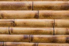 Nasser gelber Bambushintergrund Lizenzfreie Stockbilder