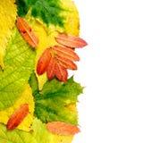 Nasser Herbstlaub Stockfotos