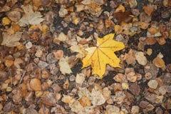 Nasser Herbstlaub nach Regen auf dem Boden stockbild