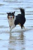 Nasser Hund Stockfotografie