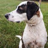 Nasser Hund Stockfoto
