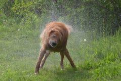 Nasser Hund Lizenzfreies Stockfoto