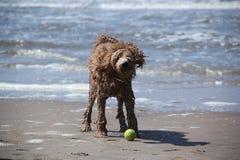Nasser Hund Stockbilder