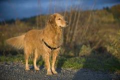 Nasser Hund warf in der Nachmittagsleuchte auf. Stockfotos
