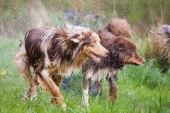 Nasser Hundesatz Stockfoto