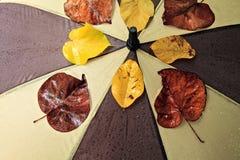 Nasser Regenschirm Stockbild