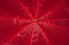 Nasser roter Regenschirm Stockfoto