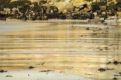 Nasser Sand Strand Lizenzfreies Stockbild